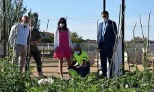 Huertos urbanos ecológicos